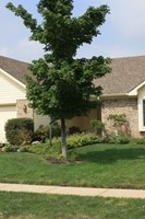 12826 Patrick Court, Fishers, IN, 46038